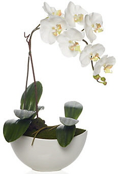 potted-phalaenopsis